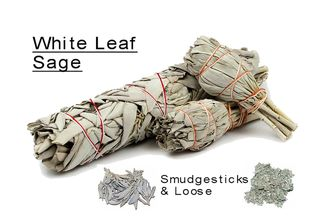 White Leaf Sage Smudgesticks